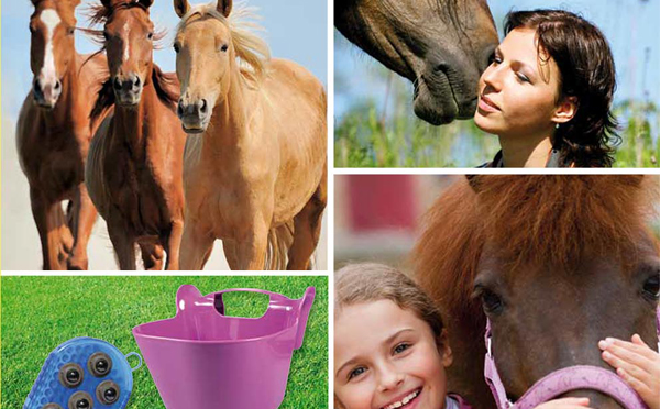 Ló, lovas és istálló felszerlés 2014
